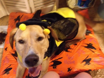 Bobby's Bumble Bee Halloween Costume.jpg